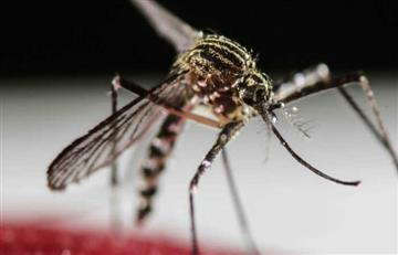 Zika: Alerta por una nueva vía de contagio
