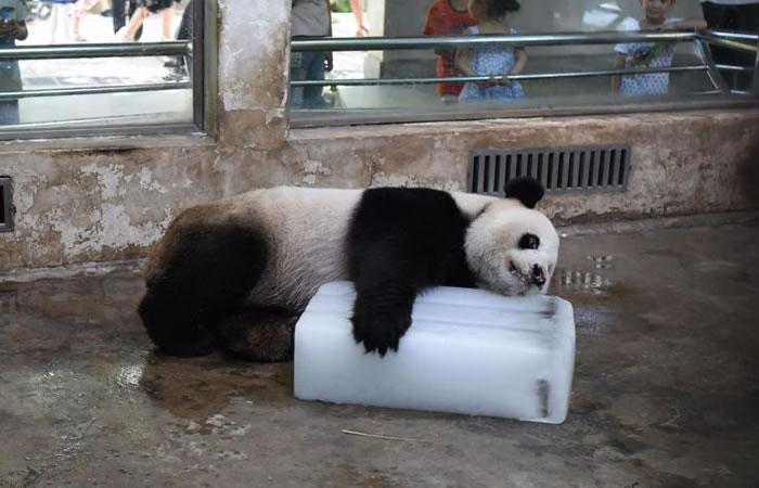Panda se vuelve viral en redes. Foto: Facebook
