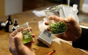 Armando Benedetti demandará el decreto sobre marihuana medicinal