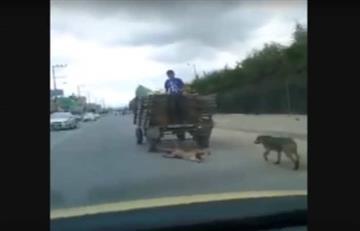 Video: Hombre arrastra a un perro en Madrid, Cundinamarca