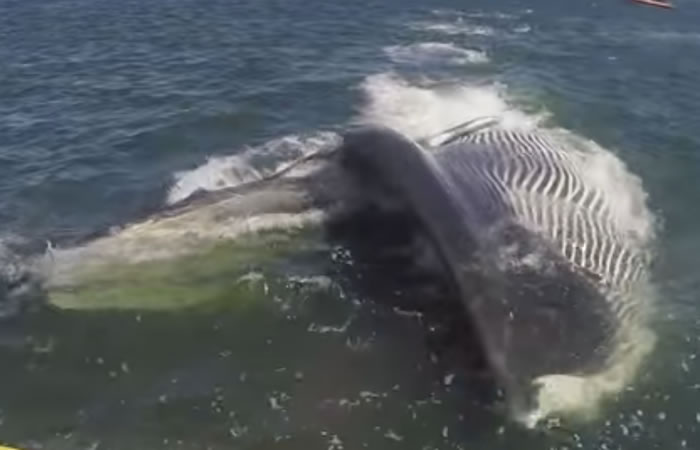 Youtube: Enorme ballena intenta devorar a turistas