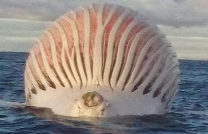 Hallan misteriosa esfera en el Océano Índico
