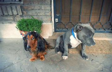 YouTube: La reacción de estos perros arrepentidos se vuelve viral