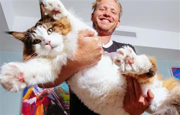 Instagram: Samson, el gato más grande del mundo que conquistó las redes