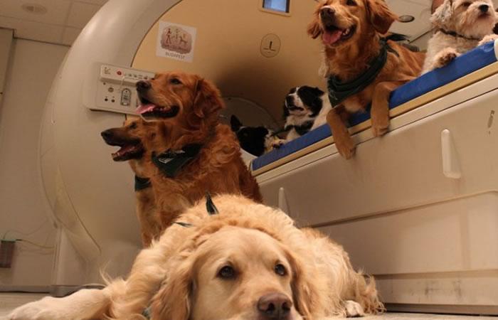 Perros entienden nuestro lenguaje y entonación. Foto: EFE