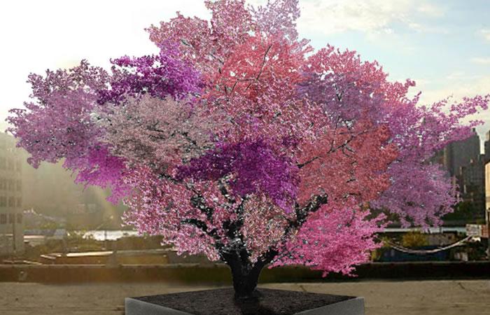Árbol multicolor produce más de 40 tipos de frutas