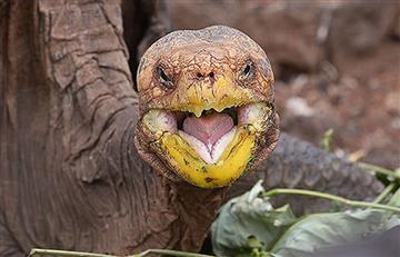 Tortuga salvó su especie de la extinción
