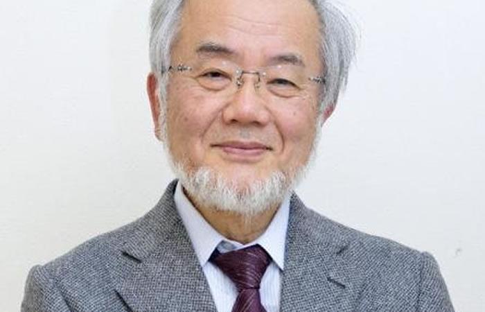 Nobel de Medicina: Japonés descubrió mecanismo de la autofagia