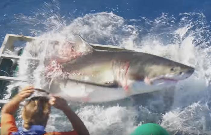 Tiburón causa pánico en la tripulación. Foto: Youtube