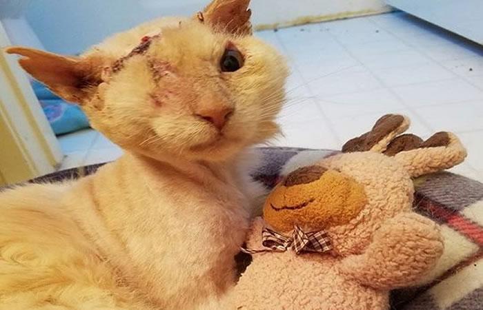 Facebook: A este gato le rociaron ácido pero él aún confía en la gente