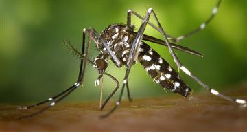 Mayaro, el virus que preocupa a los científicos
