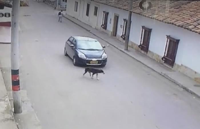Indignante: Conductor arrolló a un perro y se fugó