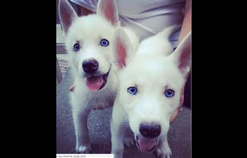 Instagram: Maluma con sus mascotas Bonnie y Clyde la sensación