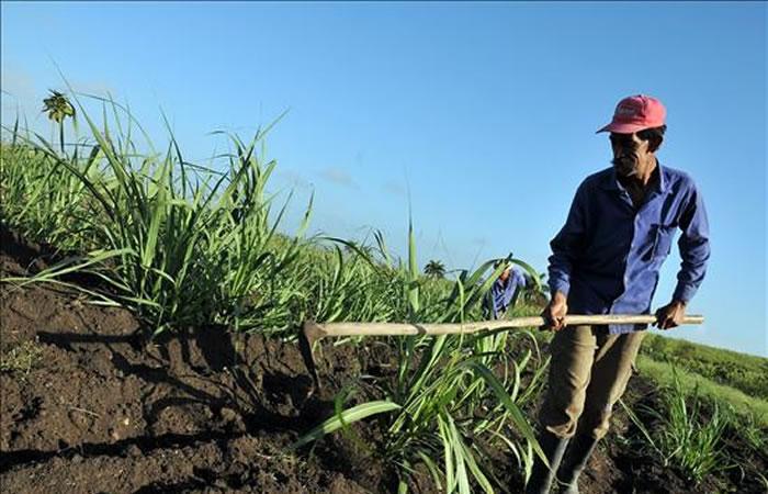 Bancolombia y Argos deberán devolver tierras
