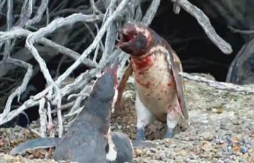 Pingüinos: Un triángulo que terminó en disputa