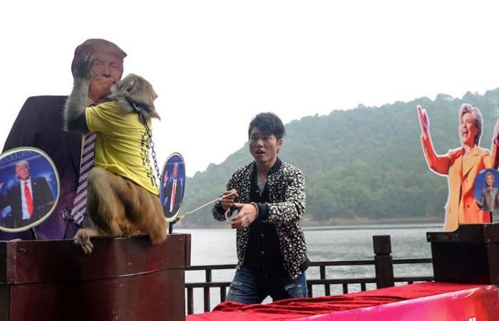 Elecciones Estados Unidos: El mono que predice quién va a ganar