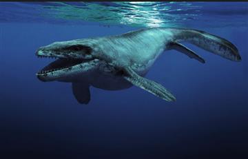 Antártida: Hallan el depredador marino más grande