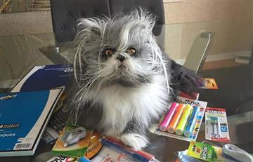 Twitter: ¿Gato o perro? La imagen que causa debate en redes