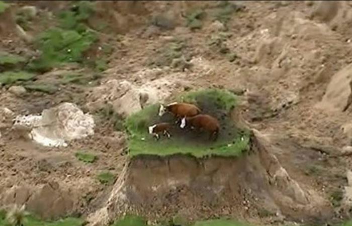 Youtube: Las vacas que se salvaron de un fuerte terremoto