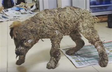 Indignante: Perro fue cubierto de pegamento hasta quedar inmóvil