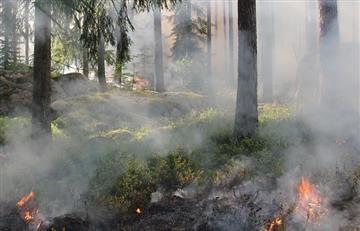 Facebook: Incendia bosque para ganar seguidores