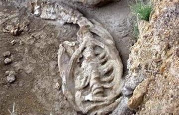 Japón: Identifican fósil como una nueva especie de ballena