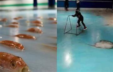 Japón: Pista de patinaje con peces congelados causa indignación