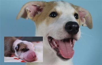 Argentina: Familia pagó miles de dólares por clonar a su perro