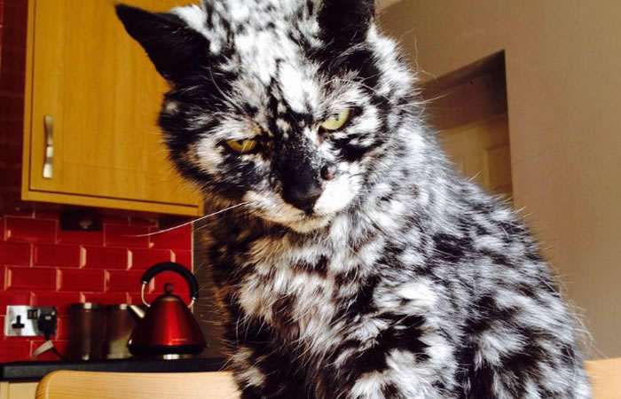Gato capta la atención de internautas por su rara piel