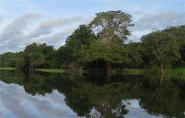 Amazonas: Instalan sensores inalámbricos para controlar la deforestación