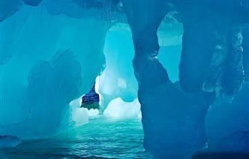 Océano Antártico: Logran grabar su diversidad de vida submarina