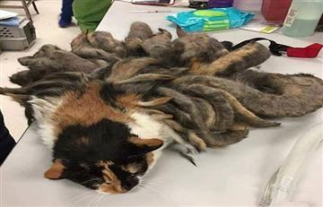 El gato rastafari abandonado por su dueño