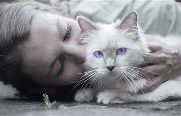 Si tienes gatos eres más propenso a ser sadomasoquista