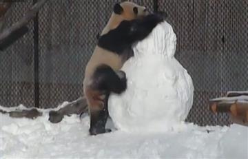 Facebook: Panda se enfrenta con un muñeco de nieve