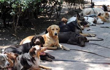 Bogotá: Animales enfermos fueron rescatados de tiendas de mascotas