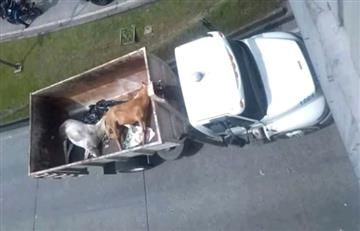 Feria de Manizales: Dos caballos muertos en los festejos