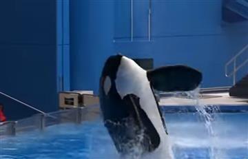 Orca Tilikum muere, exigen no más animales en cautiverio