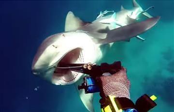 YouTube: Ataque de un tiburón a un buceador queda grabado