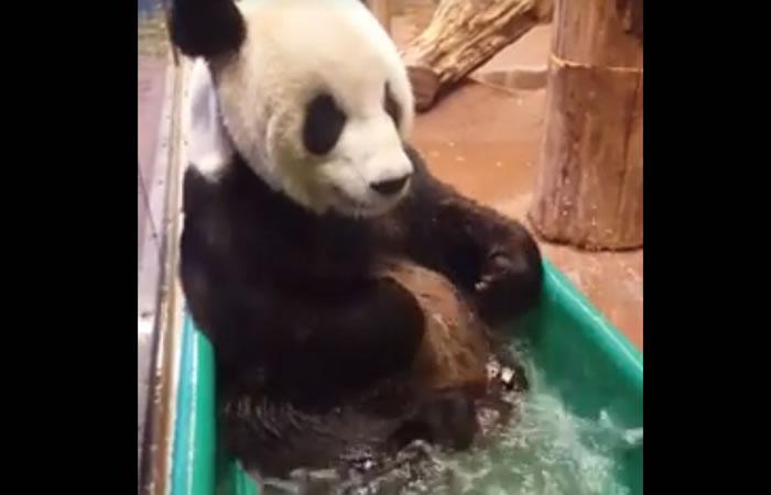 Facebook: Panda enamora con tierno baño