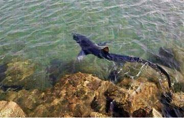 Tiburón Bambú de Atlantis será llevado a Medellín