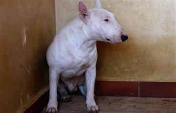 Medellín: Perro pitbull atacó a bebé de 14 meses
