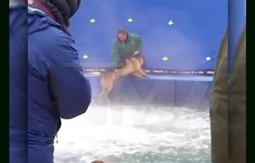Película 'A dog's purpose' crea polémica por maltrato animal