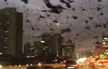 Houston: Cientos de aves negras vuelan sobre la ciudad