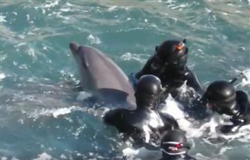 Facebook: Delfín se desespera al ser alejado de su cría