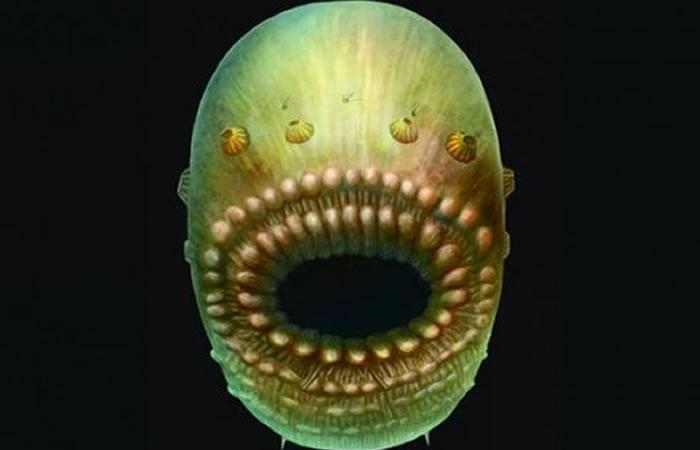 Hallan criatura marina que pudo ser el abuelo de los humanos