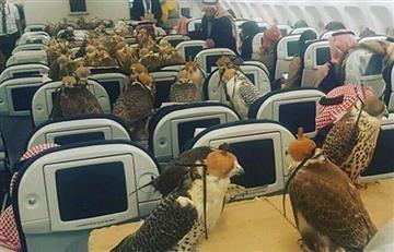 Príncipe saudí paga boletos de avión a sus 80 halcones