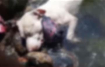 Antioquia: Encontraron perrita ahogada