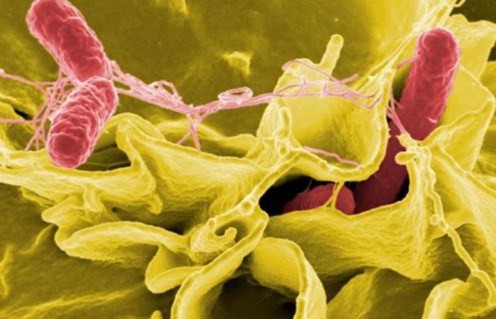 Bacterias para combatir el cáncer. Foto:EFE