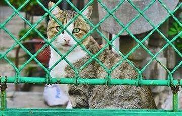 Bogotá: Jornada de adopción de mascotas este sábado