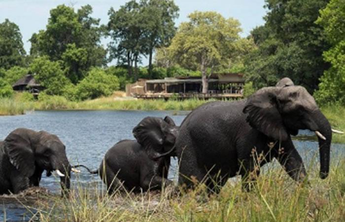 Elefante africano. Foto: EFE